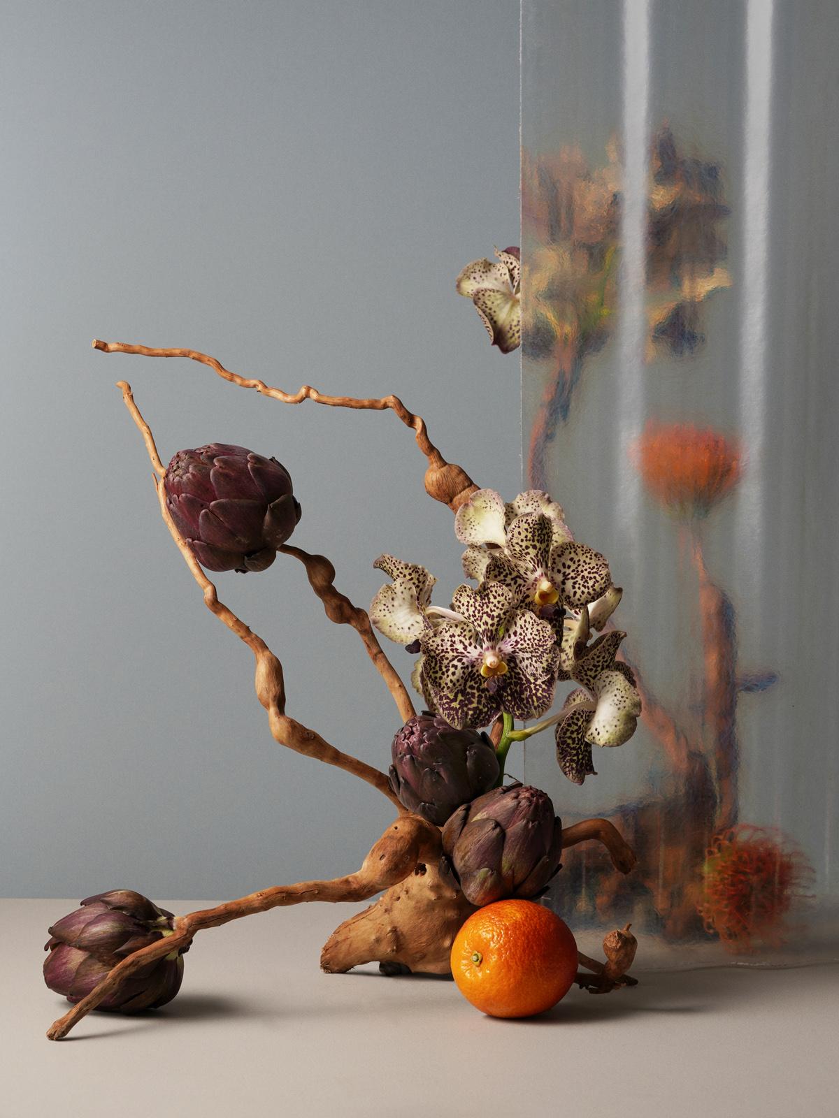 Cosmosplantea0333